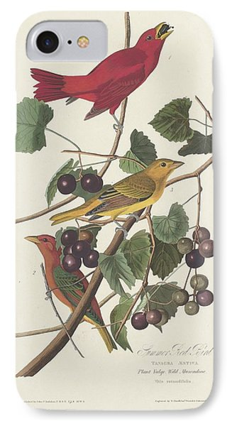 Summer Red Bird IPhone Case by Rob Dreyer