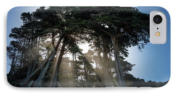 Sunbeams From Large Pine Or Fir Trees On Coast Of San Francisco  Phone Case by Steven Heap