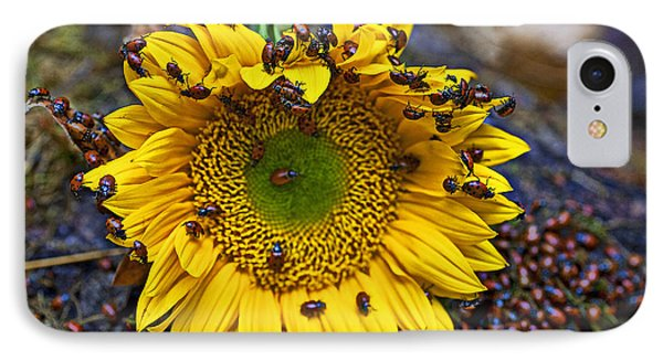 Sunflower Covered In Ladybugs IPhone 7 Case
