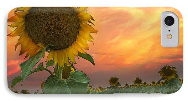 Sunflower Field  IPhone Case by Juli Scalzi