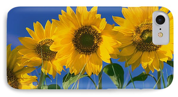 Sunflowers IPhone Case by Panoramic Images