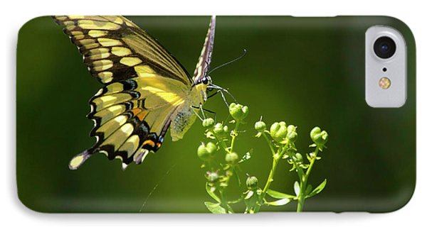 IPhone Case featuring the photograph Elegant Swallowtail Butterfly by Christina Rollo