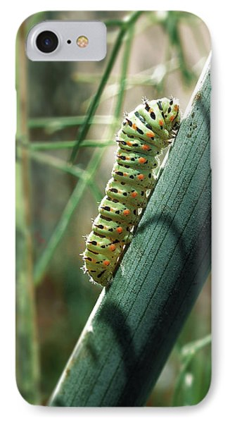 Swallowtail Caterpillar IPhone Case by Meir Ezrachi