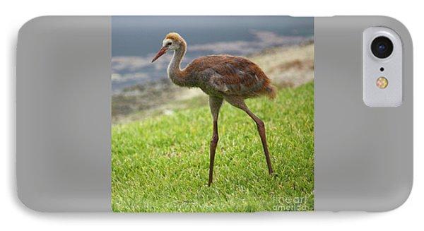 Sweet Juvenile Sandhill Crane IPhone Case by Carol Groenen