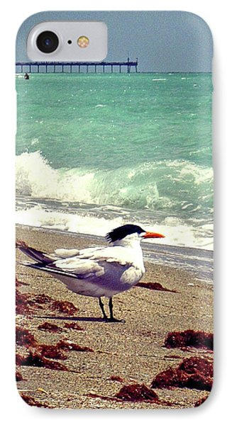 Terns On The Beach IPhone Case by Chris Andruskiewicz