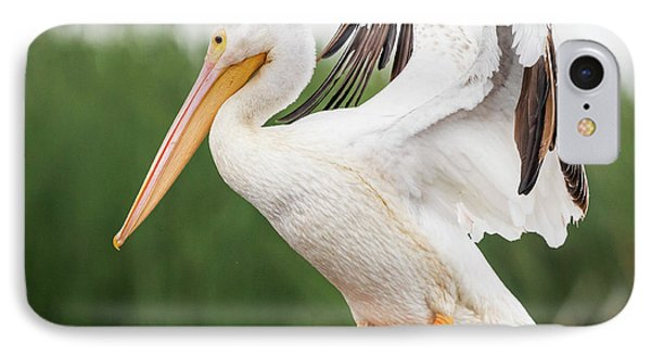 IPhone Case featuring the photograph The Amazing American White Pelican  by Ricky L Jones