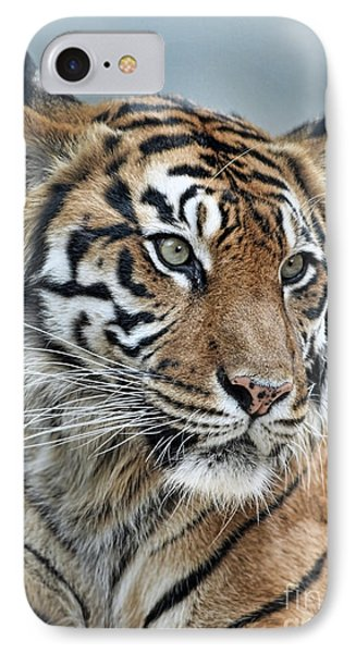 The Gaze Of A Tiger IPhone Case by Jim Fitzpatrick
