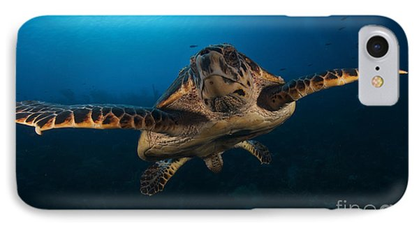 The Hawksbill Sea Turtle, Bonaire Phone Case by Terry Moore