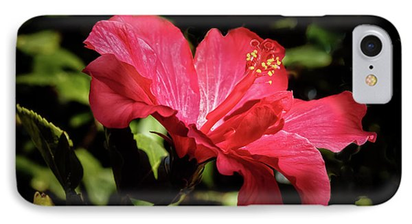 The Red Hibiscus IPhone Case by Robert Bales
