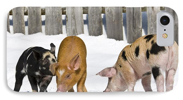 Three Piglets IPhone Case by Jean-Louis Klein & Marie-Luce Hubert