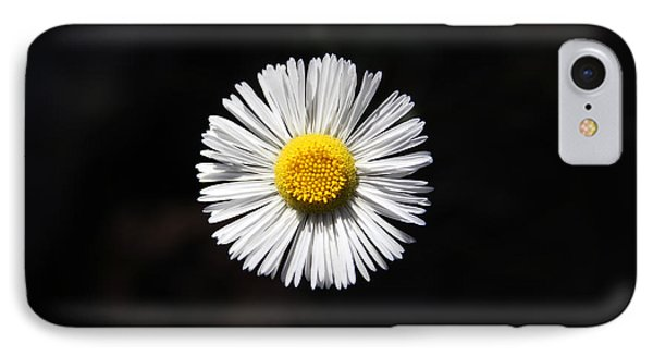 Tidy Fleabane IPhone Case by Charles Ables