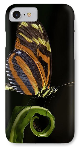Tiger Longwing IPhone Case by JT Lewis