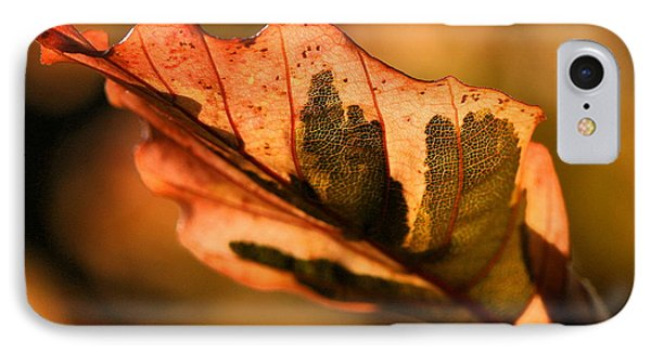 Tri-color Beech In Autumn IPhone Case