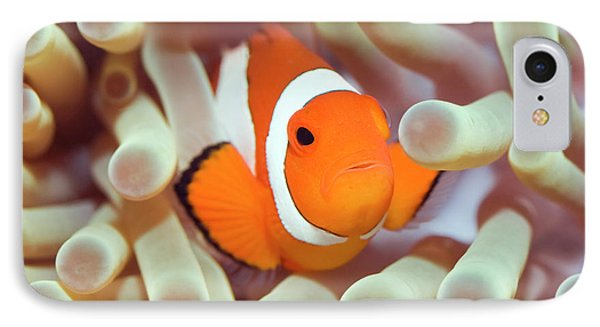 Tropical Fish Clownfish Phone Case by MotHaiBaPhoto Prints