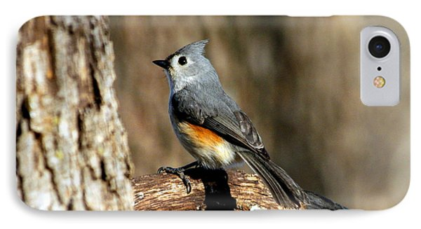 Tufted Titmouse On Branch IPhone Case by Sheila Brown