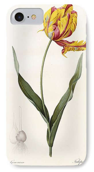 Tulip IPhone Case by Pierre Joseph Redoute