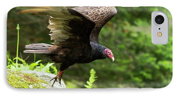 IPhone Case featuring the photograph Turkey Vulture by Mircea Costina Photography