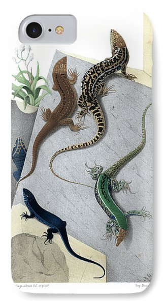 IPhone Case featuring the drawing Varieties Of Wall Lizard by Jacques von Bedriaga