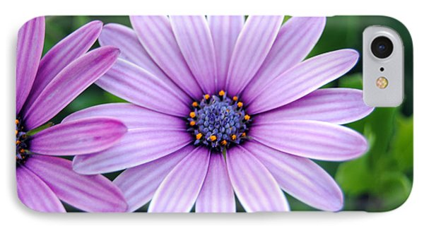 The African Daisy 3 IPhone Case by Isam Awad
