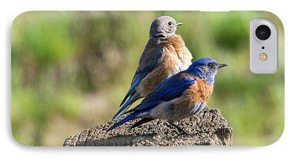 Western Bluebird Pair IPhone 7 Case by Mike Dawson