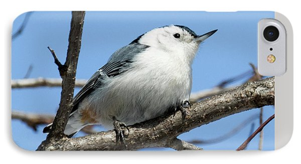 White-breasted Nuthatch IPhone 7 Case by Ricky L Jones