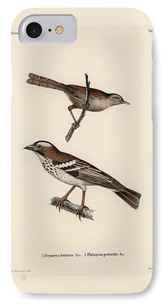 White-browed Sparrow-weaver And Grass Or Bush Warbler IPhone Case by J D L Franz Wagner