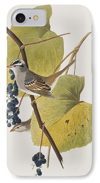 White-crowned Sparrow IPhone 7 Case