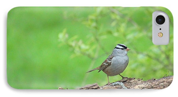 White Crowned Sparrow Phone Case by Rosanne Jordan