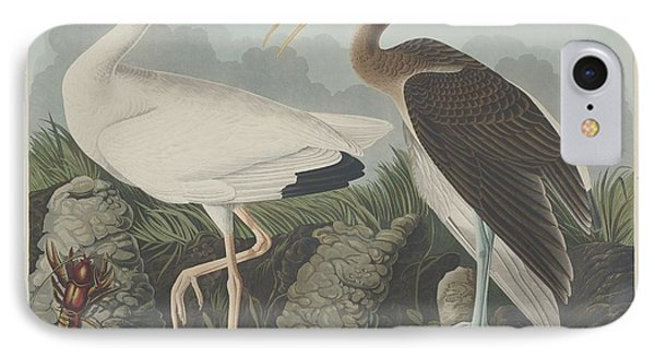 White Ibis IPhone Case by Dreyer Wildlife Print Collections