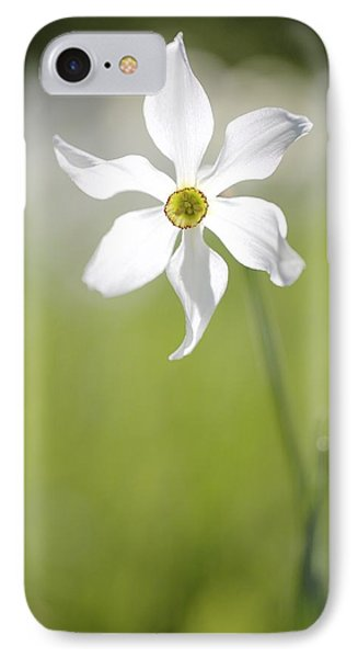 IPhone Case featuring the photograph Wild Narcissus Glowing In Sunlight by Colleen Williams