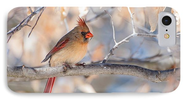 Winter Cardinal IPhone Case by Debbie Green