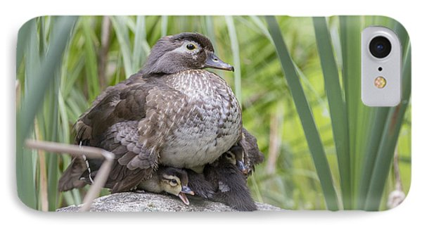 Wood Duck Family IPhone Case by Mircea Costina Photography