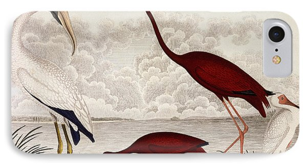 Wood Ibis, Scarlet Flamingo, White Ibis IPhone 7 Case by Alexander Wilson