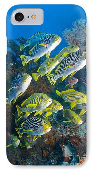 Yellow And Blue Striped Sweeltip Fish IPhone Case by Mathieu Meur