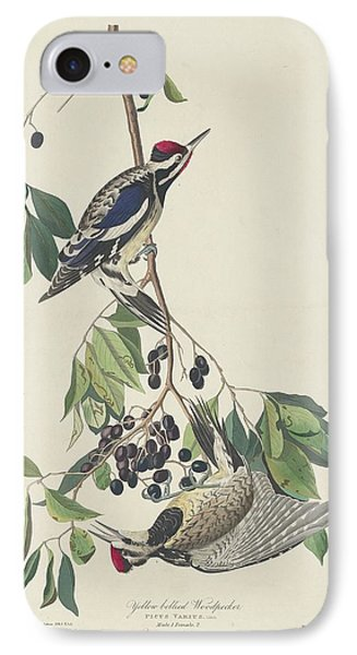 Yellow-bellied Woodpecker IPhone Case by Rob Dreyer