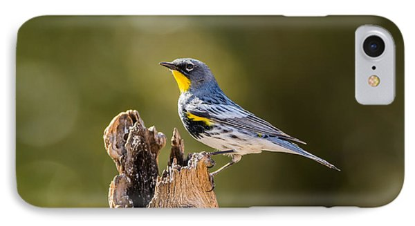 Yellow-rumped Warbler IPhone Case by Tam Ryan