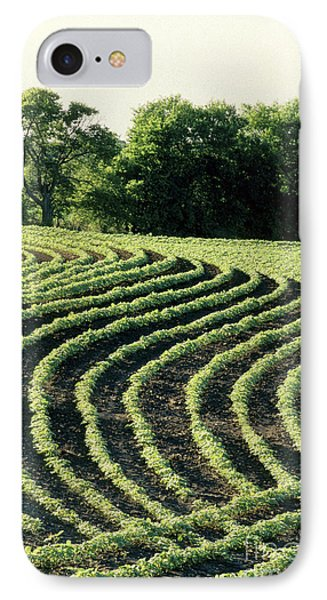 Young Soybean Plants IPhone Case by Inga Spence