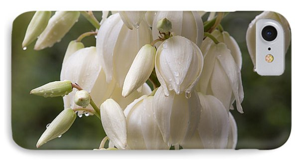 Yucca Plant In Bloom IPhone Case