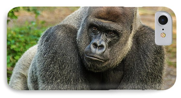 10898 Gorilla IPhone Case by Pamela Williams