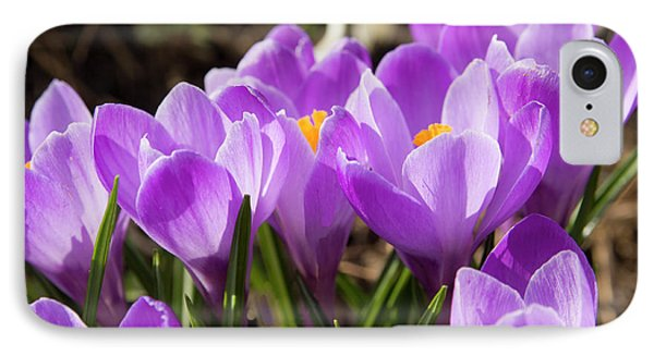 Purple Crocuses IPhone Case