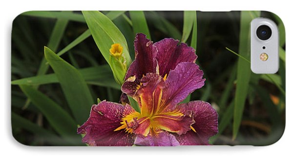 Louisiana Iris IPhone Case
