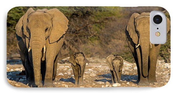 African Elephants Loxodonta Africana IPhone Case by Panoramic Images