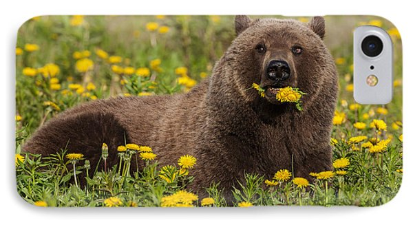 A Brown Bear Forages On Dandelions IPhone Case