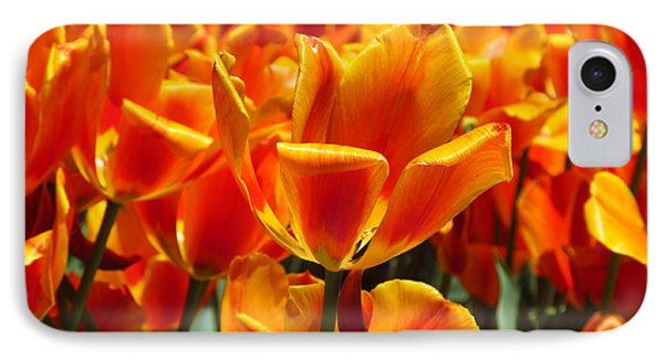A Field Of Orange IPhone Case by Alfred Ng