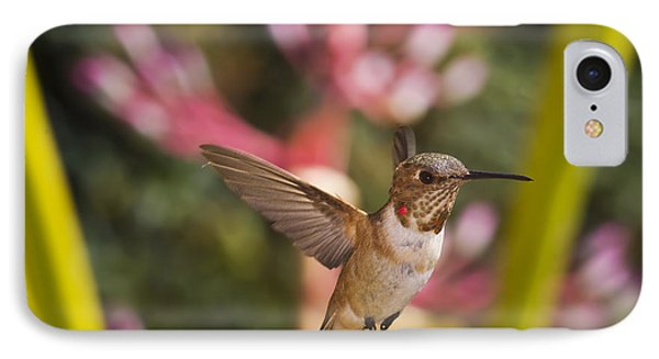 Allen's Hummingbird Phone Case by Mike Herdering