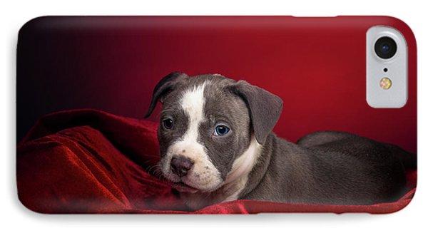 American Pitbull Puppy IPhone Case by Peter Lakomy