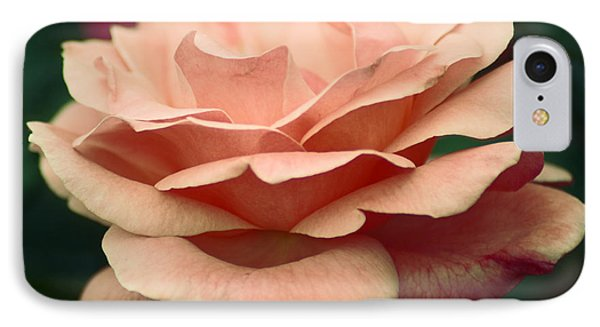 Antique Rose IPhone Case by Donna Bentley