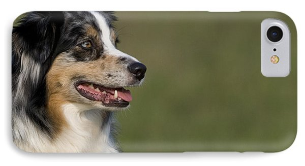 Australian Shepherd IPhone Case by Jean-Louis Klein & Marie-Luce Hubert