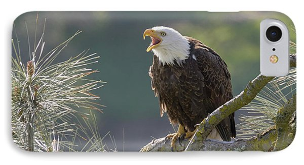 Bald Eagle Phone Case by Doug Herr