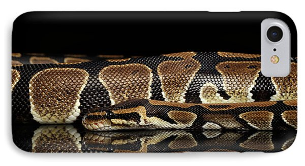 Ball Or Royal Python Snake On Isolated Black Background IPhone 7 Case by Sergey Taran